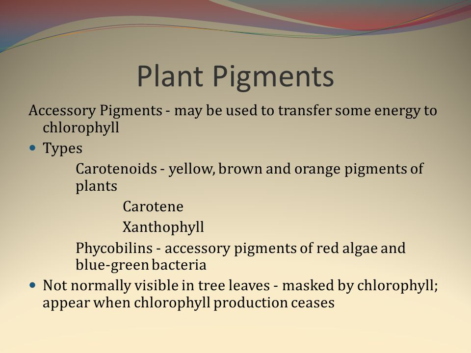 Plant Pigments Accessory Pigments - may be used to transfer some energy to chlorophyll. Types.
