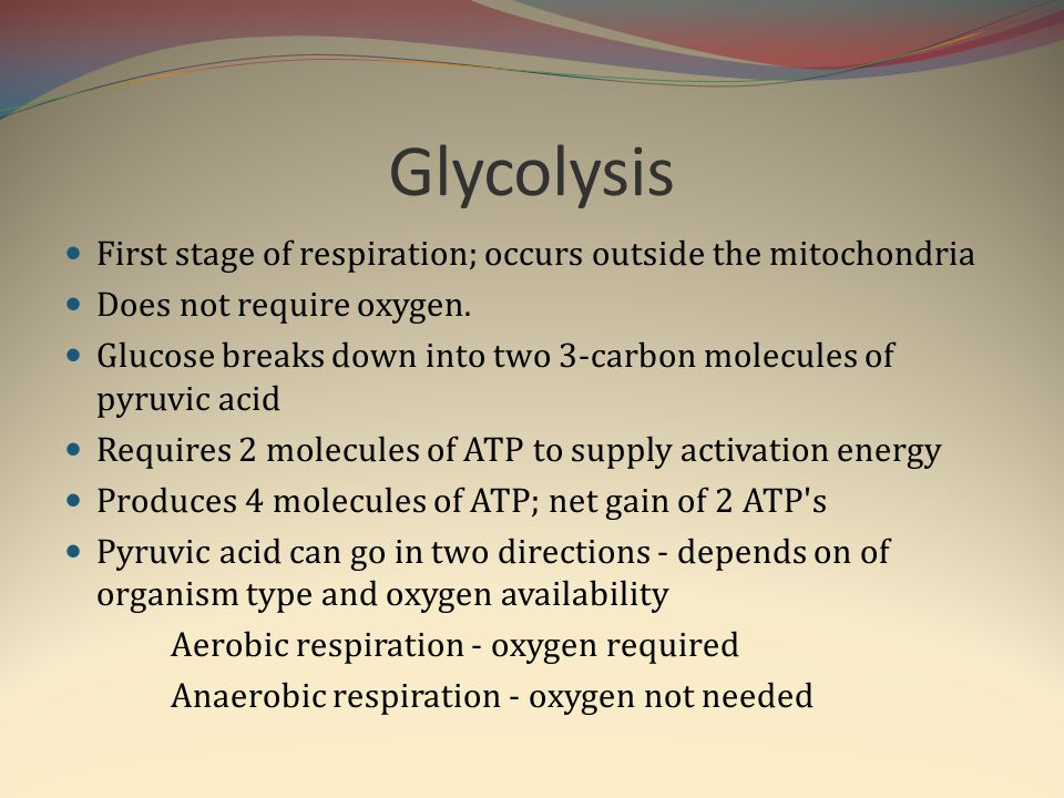 Glycolysis First stage of respiration; occurs outside the mitochondria