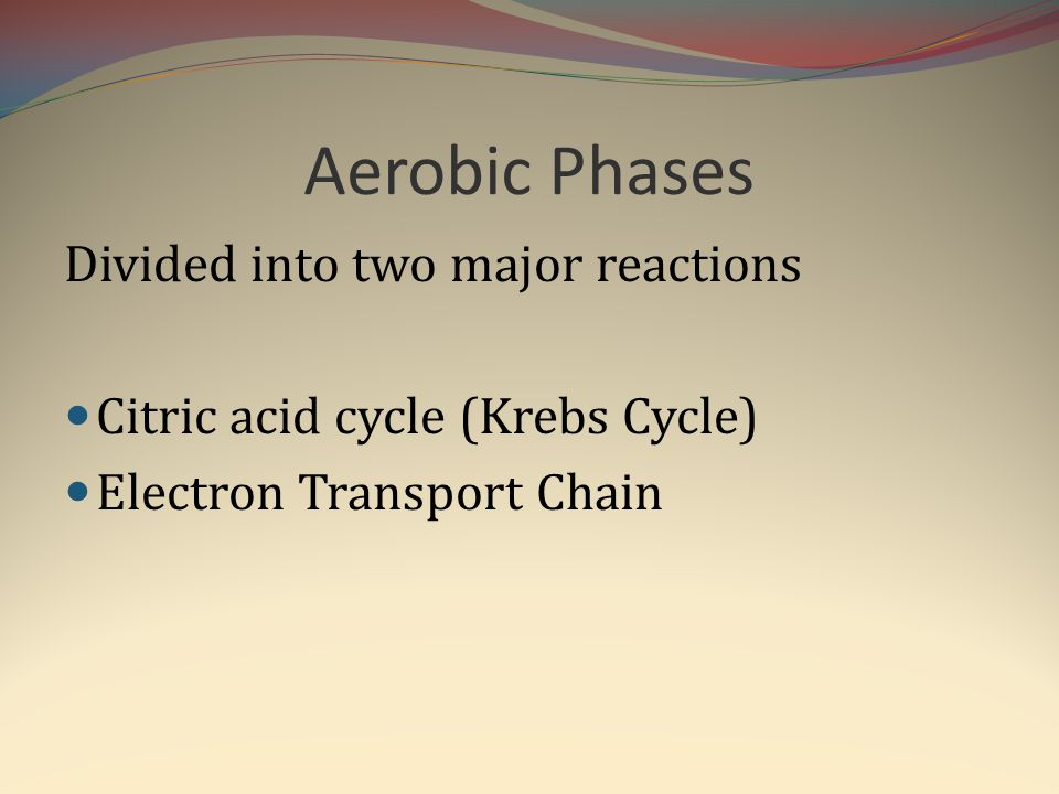 Aerobic Phases Divided into two major reactions