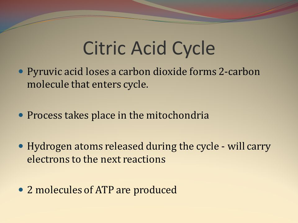 Citric Acid Cycle Pyruvic acid loses a carbon dioxide forms 2-carbon molecule that enters cycle. Process takes place in the mitochondria