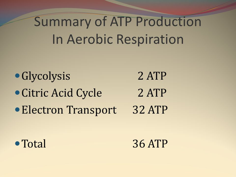 Summary of ATP Production In Aerobic Respiration