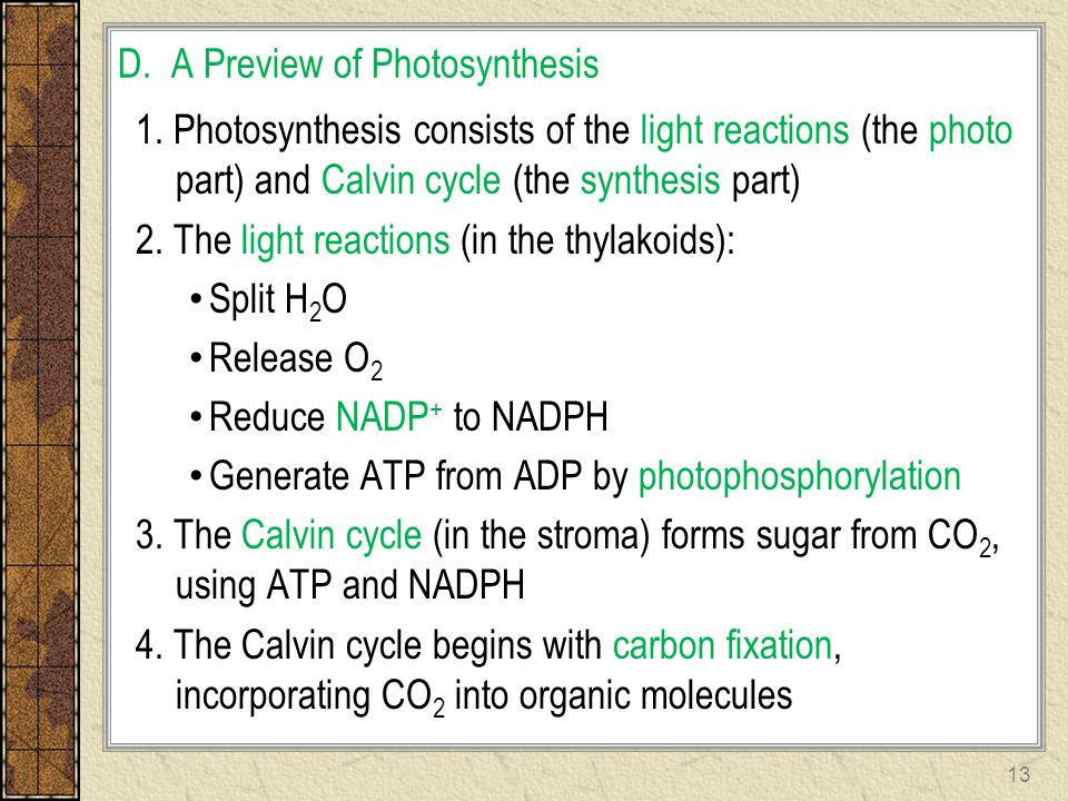 D. A Preview of Photosynthesis