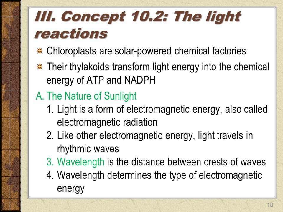 III. Concept 10.2: The light reactions