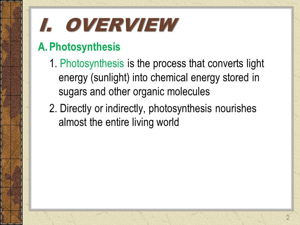 I. OVERVIEW Photosynthesis