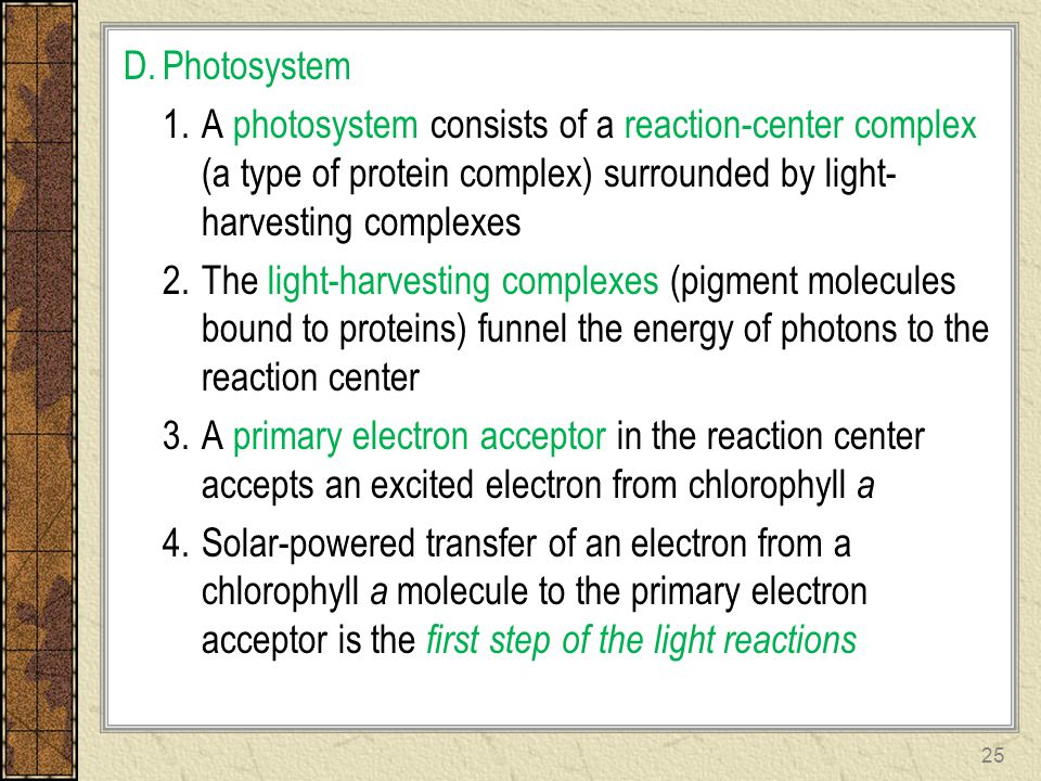 Photosystem A photosystem consists of a reaction-center complex (a type of protein complex) surrounded by light-harvesting complexes.