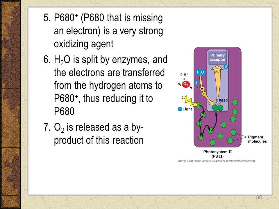 P680+ (P680 that is missing an electron) is a very strong oxidizing agent