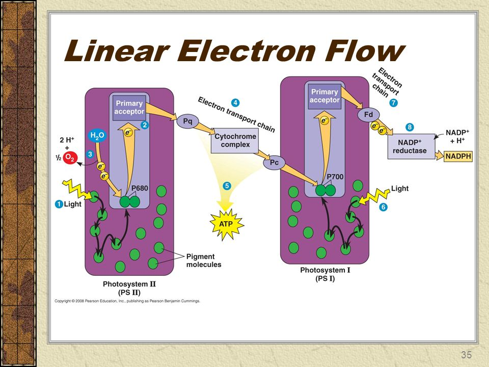 Linear Electron Flow