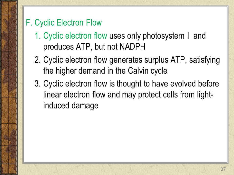 F. Cyclic Electron Flow Cyclic electron flow uses only photosystem I and produces ATP, but not NADPH.