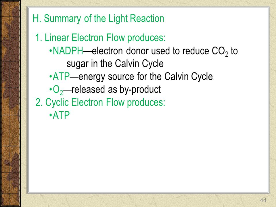 H. Summary of the Light Reaction