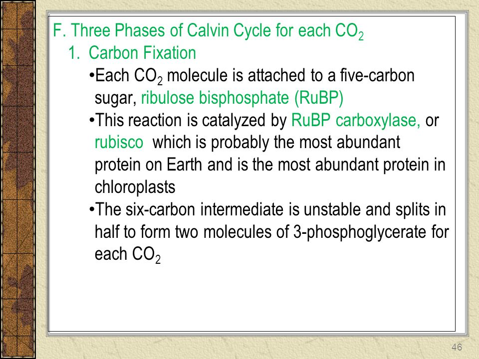 F. Three Phases of Calvin Cycle for each CO2