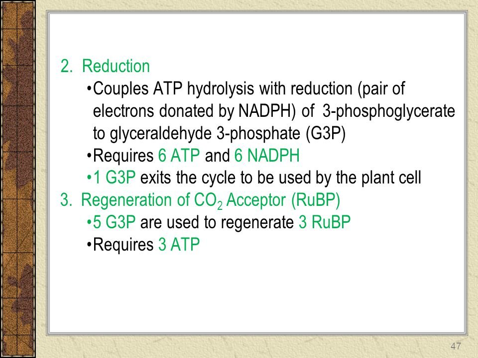 2. Reduction Couples ATP hydrolysis with reduction (pair of electrons donated by NADPH) of 3-phosphoglycerate to glyceraldehyde 3-phosphate (G3P)