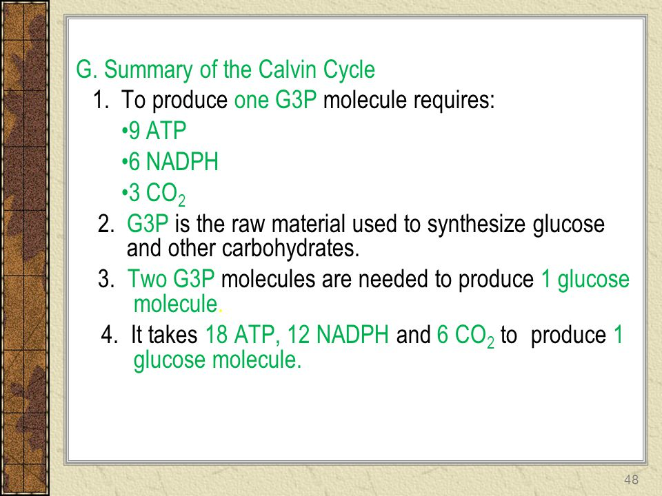 G. Summary of the Calvin Cycle