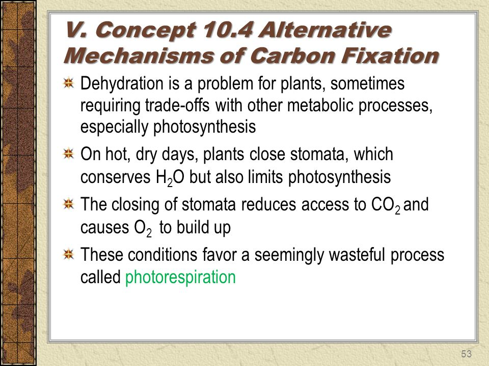 V. Concept 10.4 Alternative Mechanisms of Carbon Fixation
