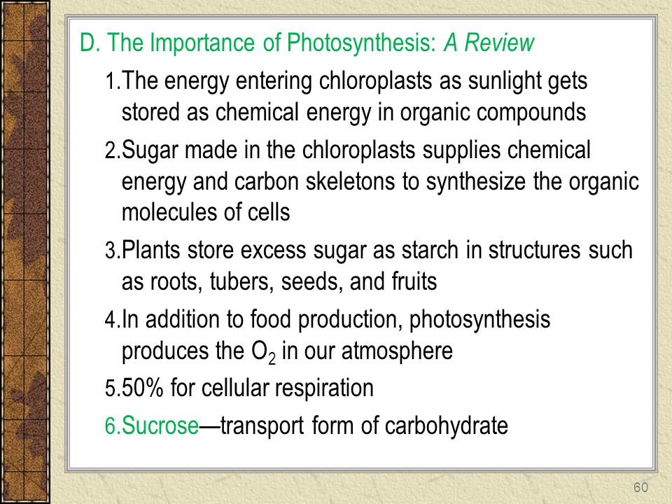 D. The Importance of Photosynthesis: A Review