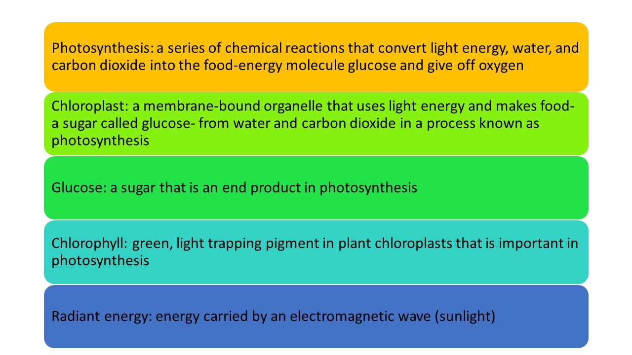 Photosynthesis: a series of chemical reactions that convert light energy, water, and carbon dioxide into the food-energy molecule glucose and give off oxygen