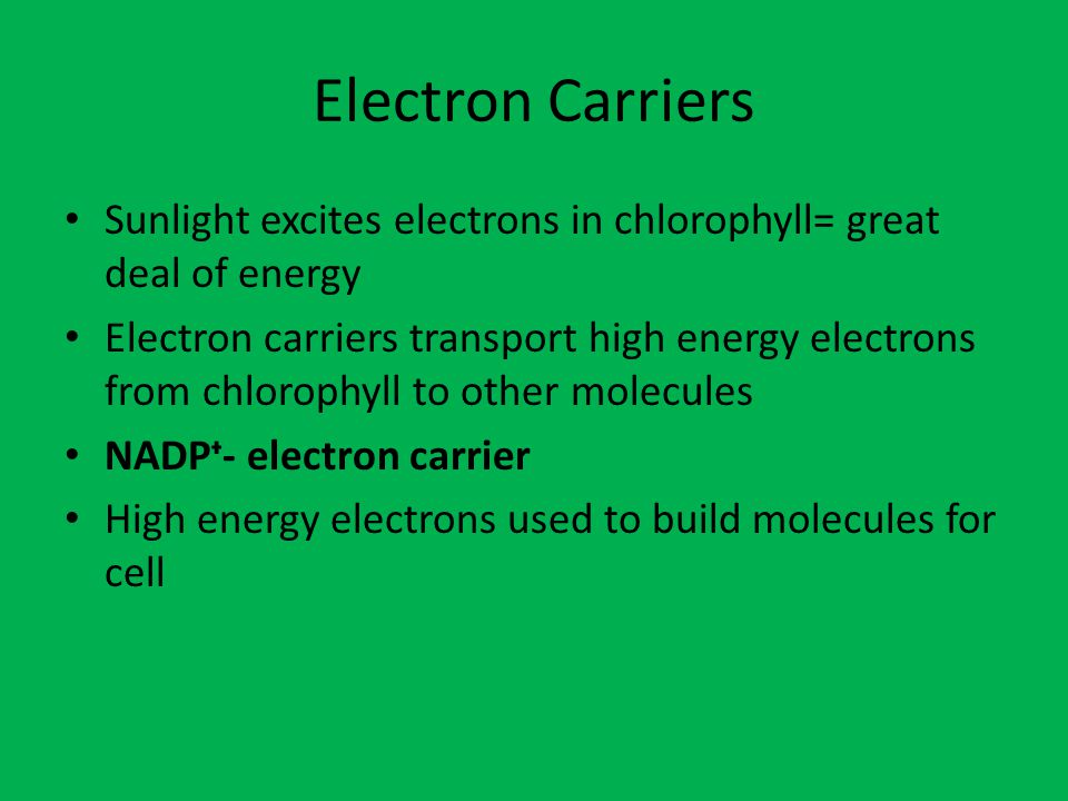 Electron Carriers Sunlight excites electrons in chlorophyll= great deal of energy.