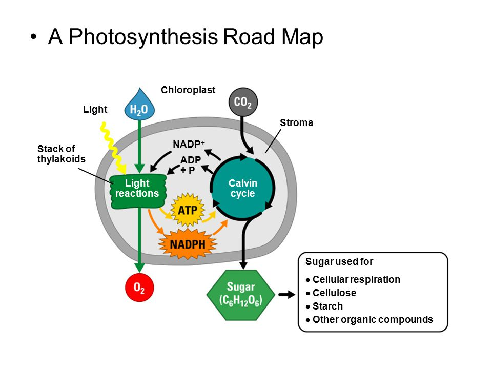 A Photosynthesis Road Map