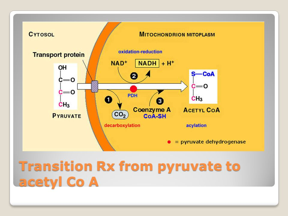 Transition Rx from pyruvate to acetyl Co A