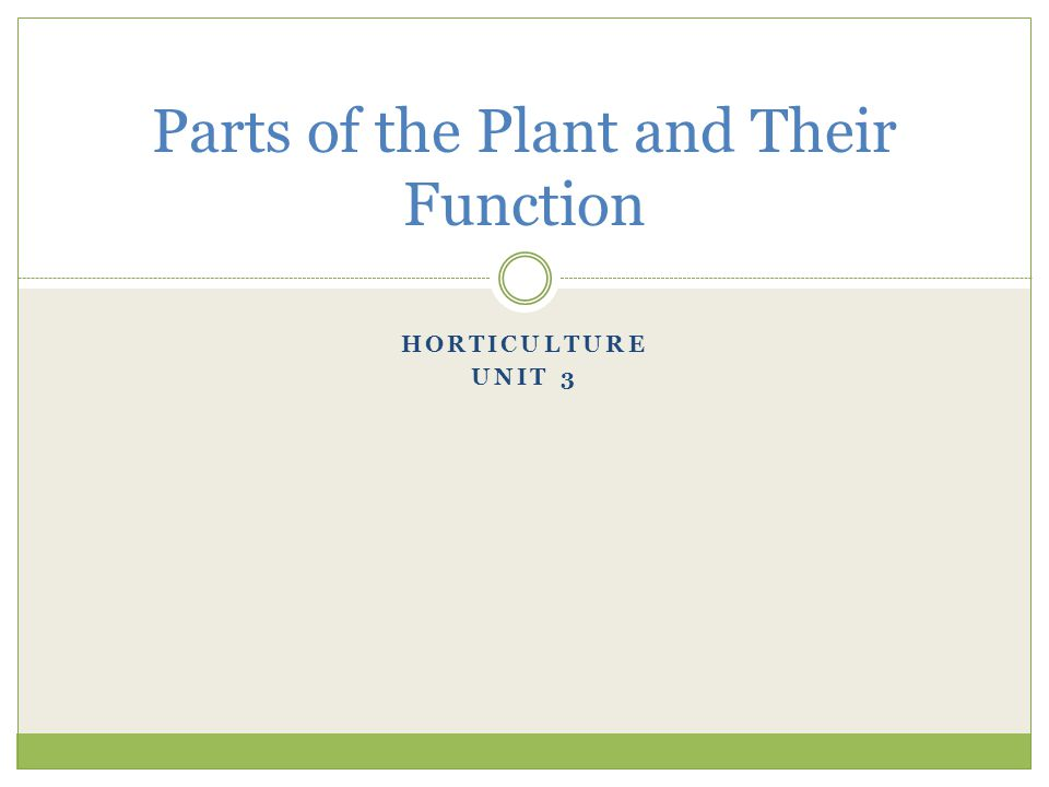 Parts of the Plant and Their Function