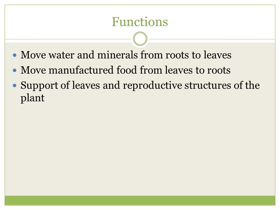 Functions Move water and minerals from roots to leaves