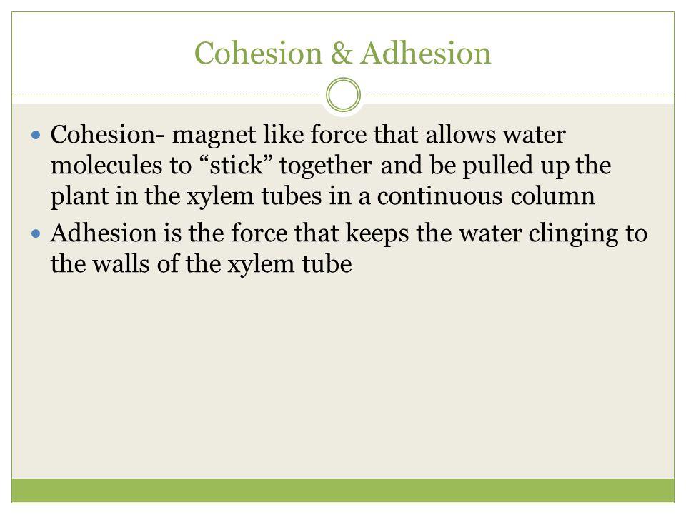 Cohesion & Adhesion