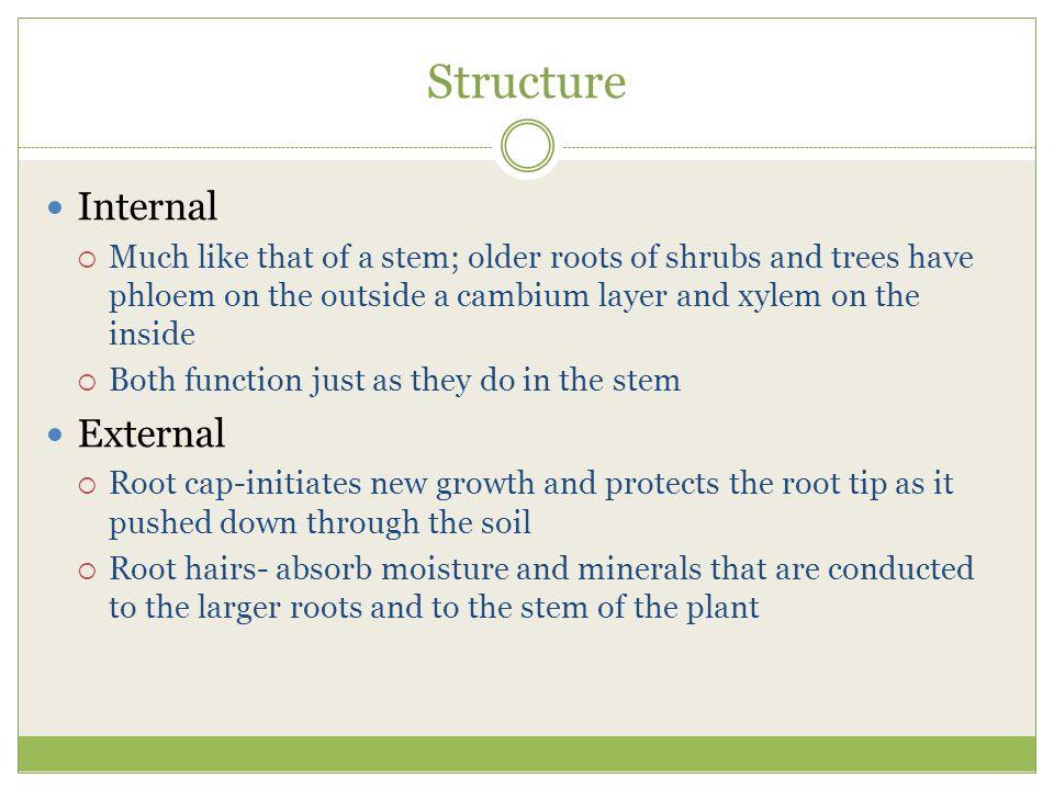 Structure Internal External