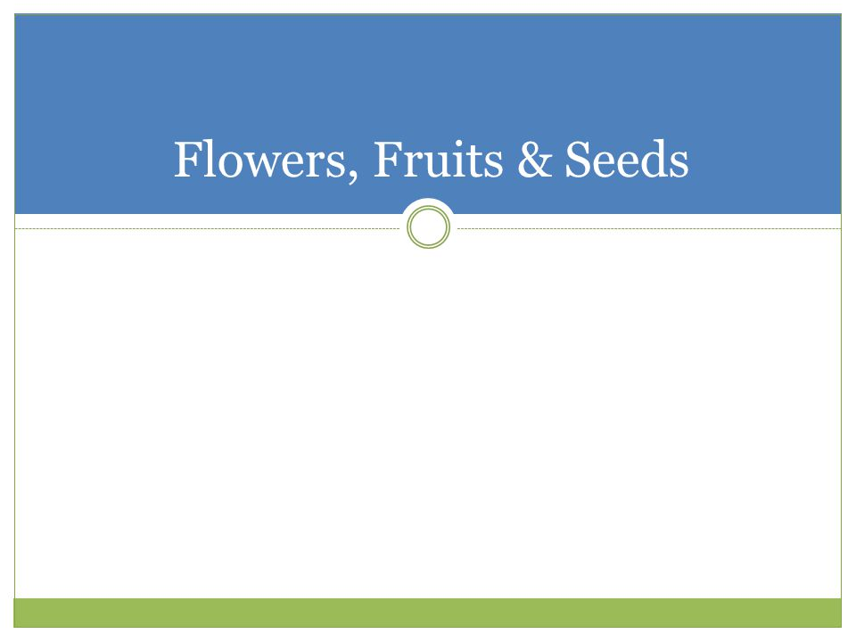 Flowers, Fruits & Seeds