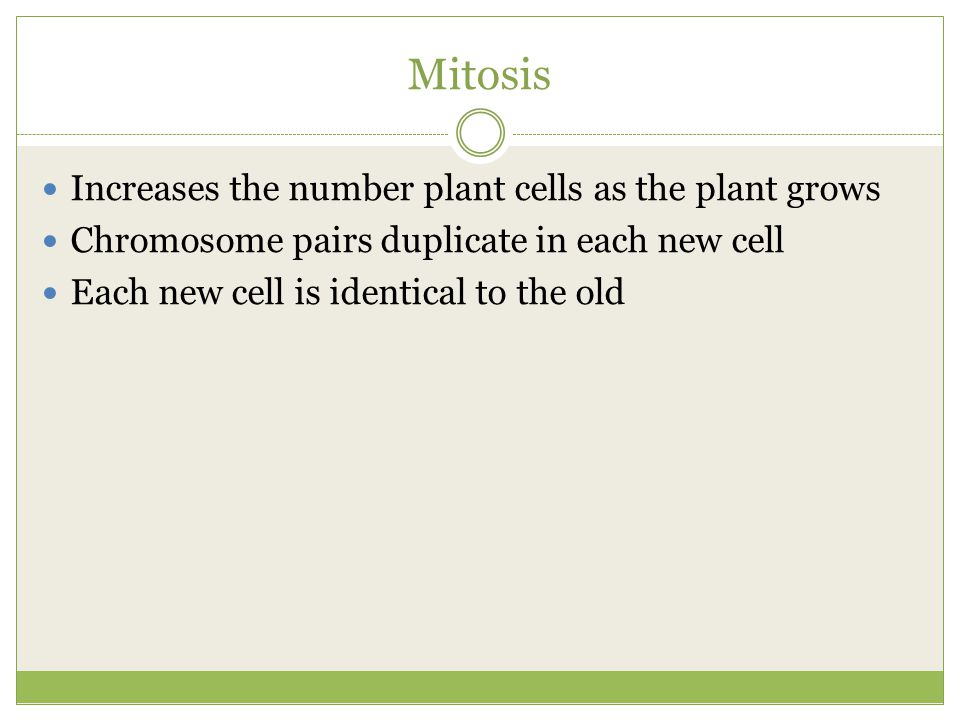 Mitosis Increases the number plant cells as the plant grows