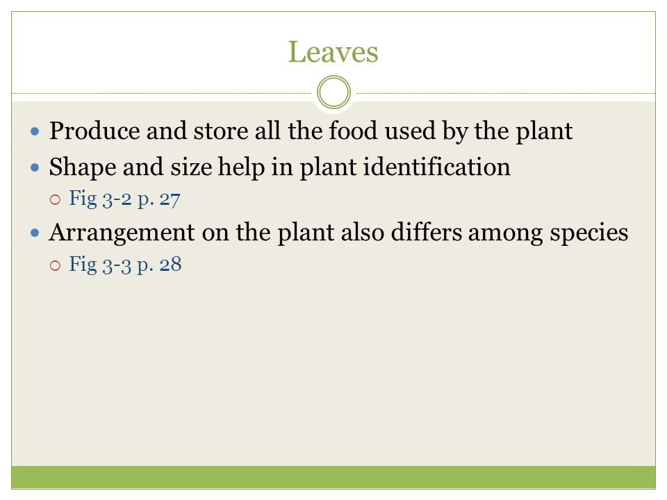 Leaves Produce and store all the food used by the plant
