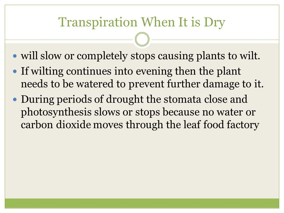 Transpiration When It is Dry