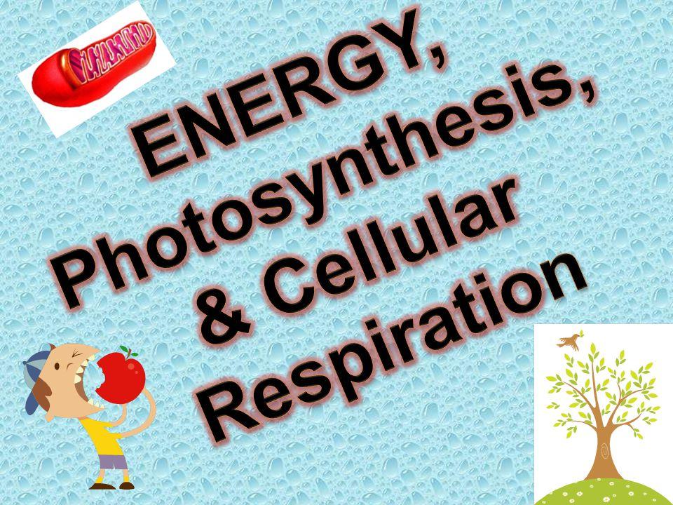 ENERGY, Photosynthesis, & Cellular Respiration