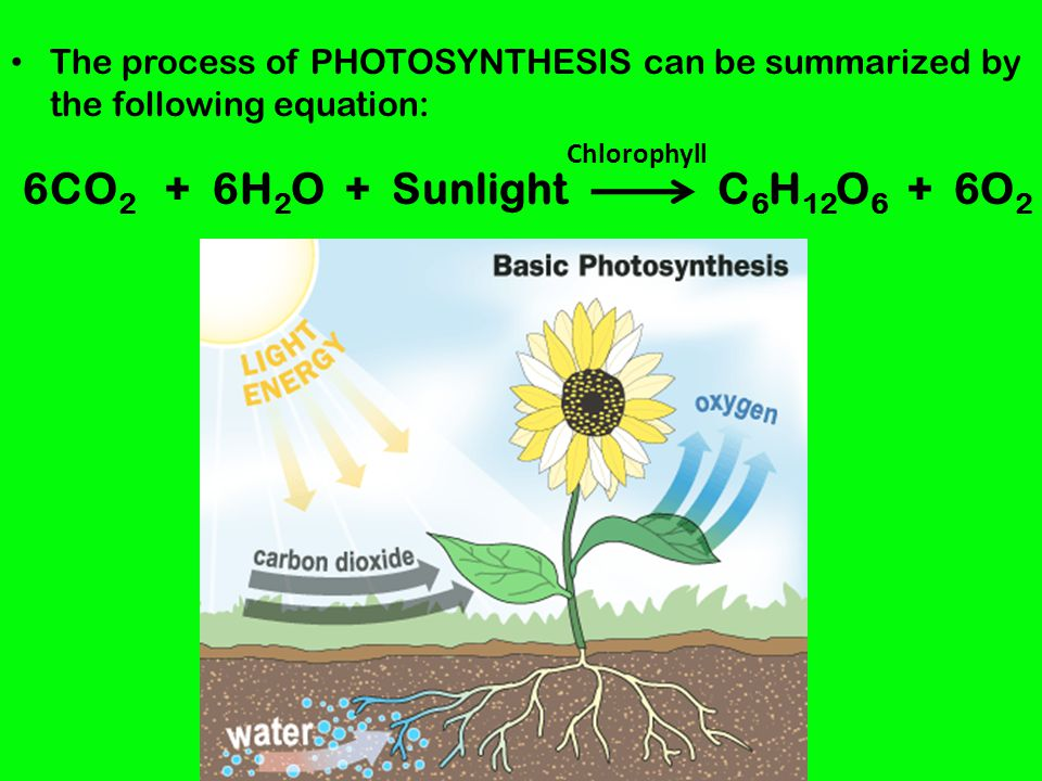 The process of PHOTOSYNTHESIS can be summarized by the following equation: