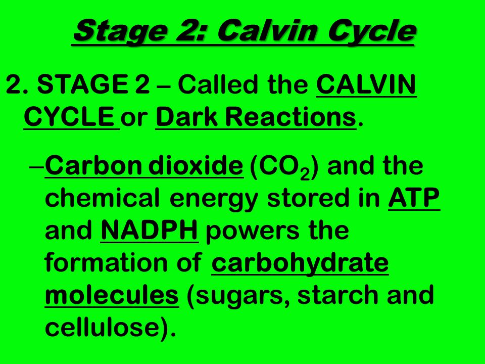 Stage 2: Calvin Cycle 2. STAGE 2 – Called the CALVIN CYCLE or Dark Reactions.