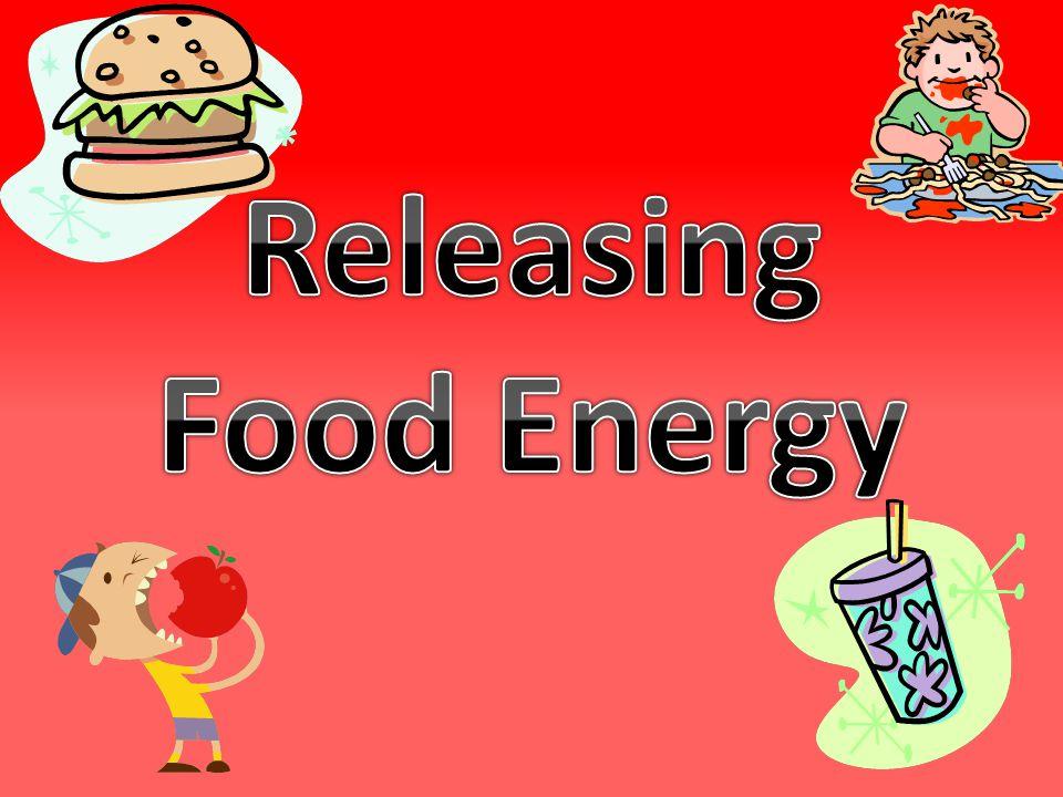 Releasing Food Energy