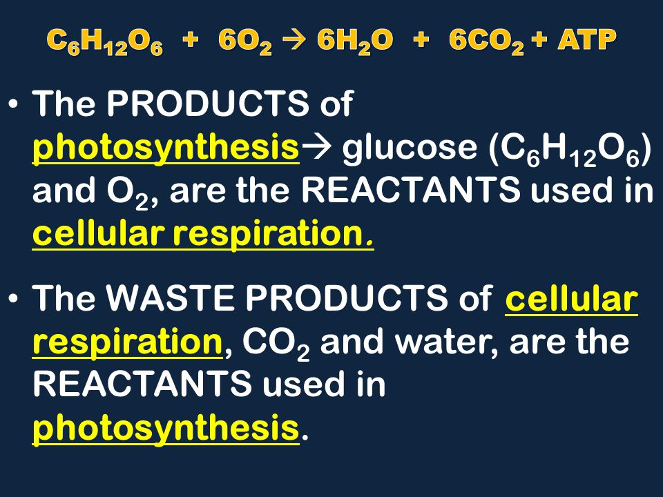 C6H12O6 + 6O2  6H2O + 6CO2 + ATP The PRODUCTS of photosynthesis glucose (C6H12O6) and O2, are the REACTANTS used in cellular respiration.