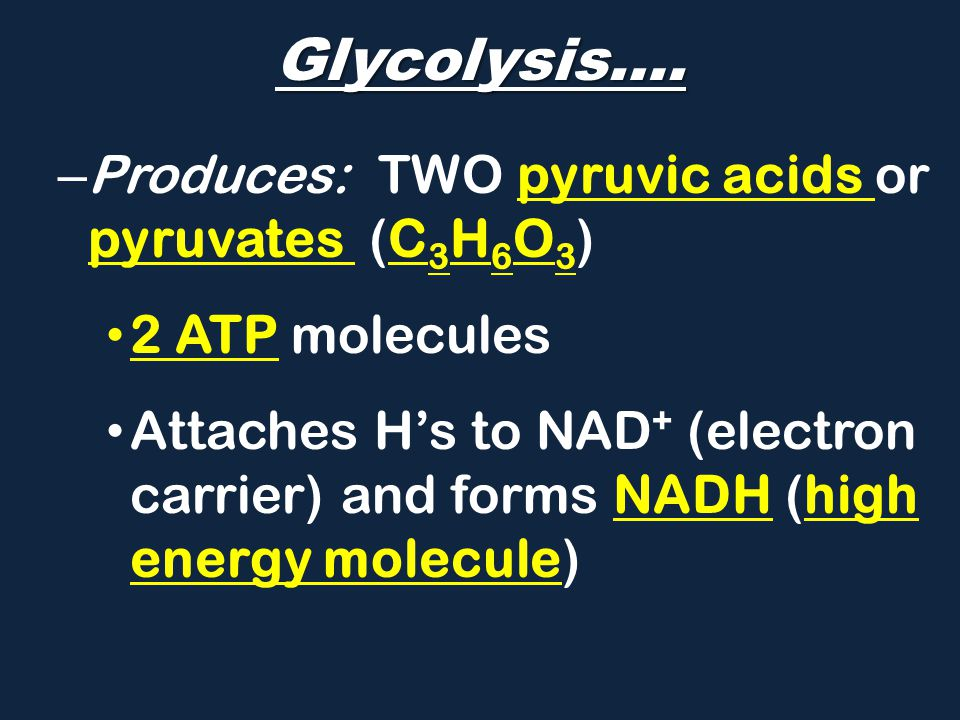 Glycolysis…. Produces: two pyruvic acids or pyruvates (C3H6O3)