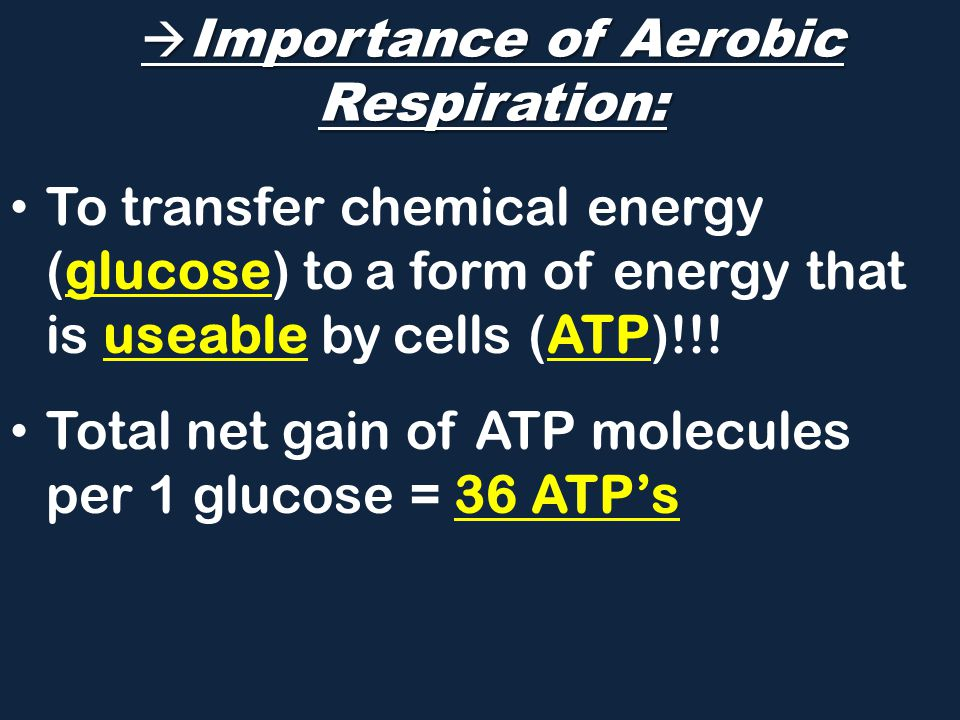Importance of Aerobic Respiration: