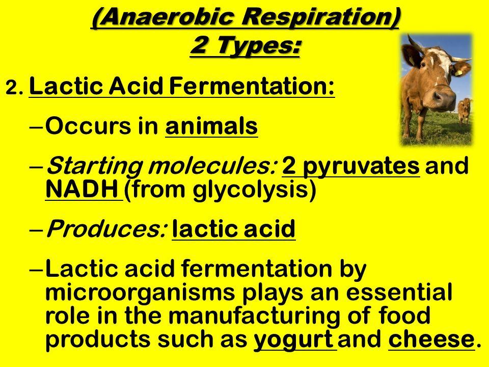 (Anaerobic Respiration) 2 Types: