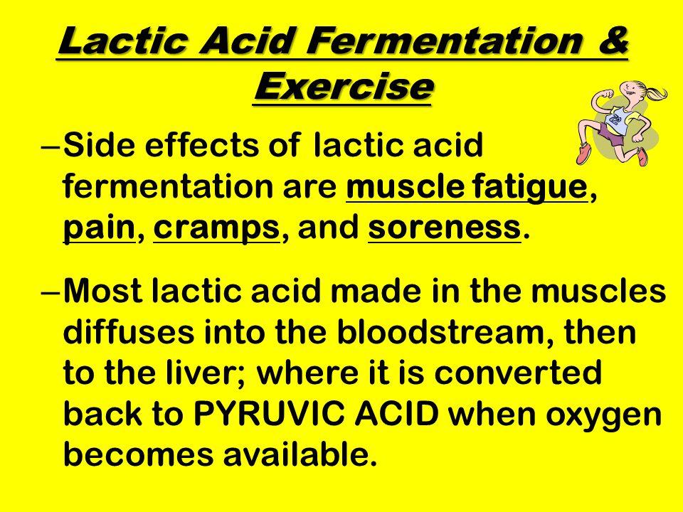 Lactic Acid Fermentation & Exercise