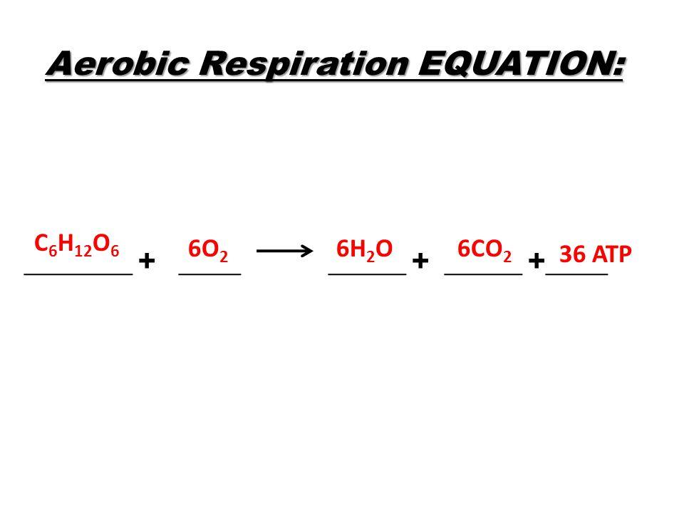 Aerobic Respiration EQUATION: