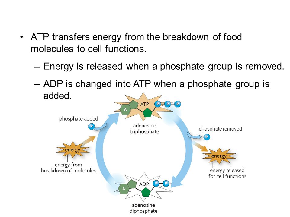 Energy is released when a phosphate group is removed.