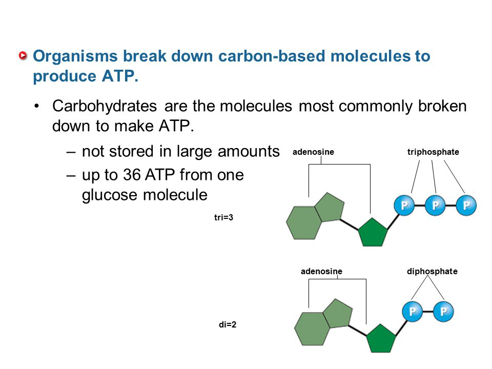 Organisms break down carbon-based molecules to produce ATP.