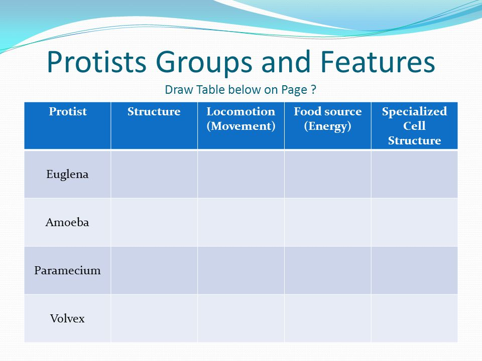 Protists Groups and Features Draw Table below on Page