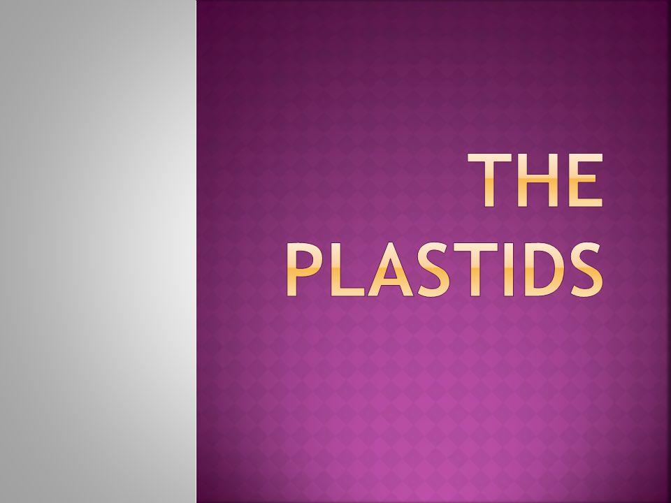 The Plastids