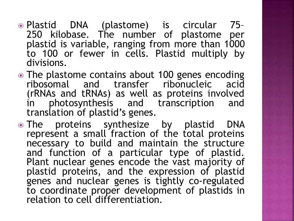 Plastid DNA (plastome) is circular 75– 250 kilobase