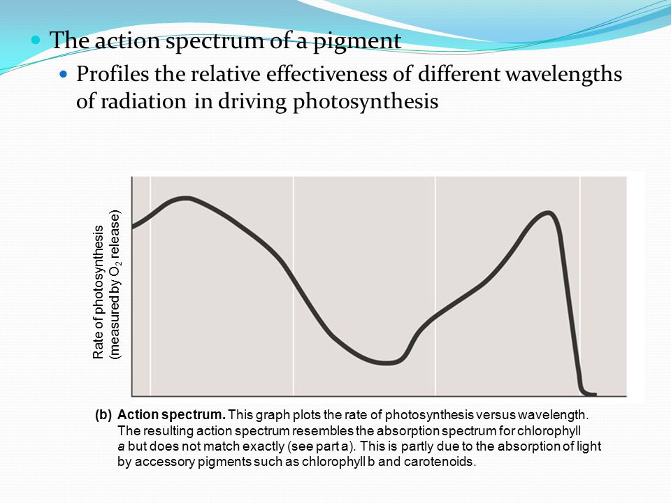 The action spectrum of a pigment