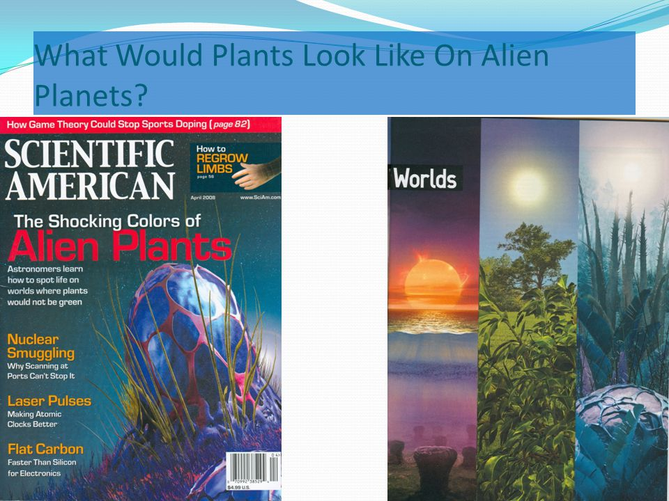 What Would Plants Look Like On Alien Planets