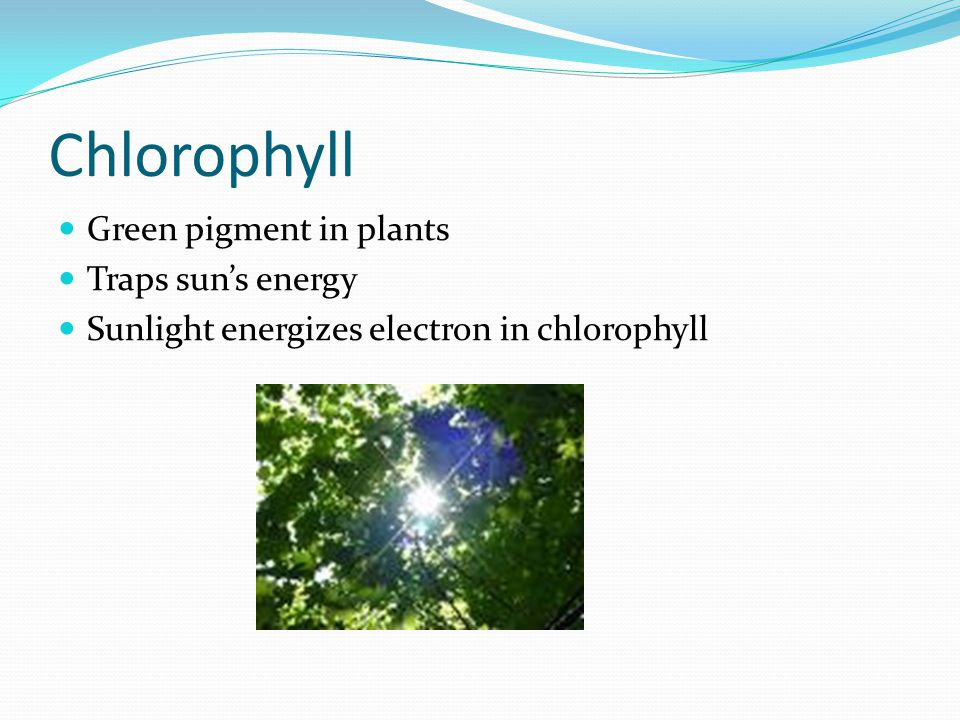 Chlorophyll Green pigment in plants Traps sun's energy