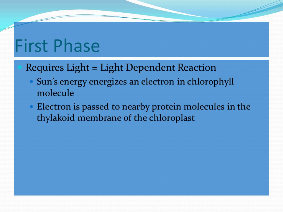 First Phase Requires Light = Light Dependent Reaction