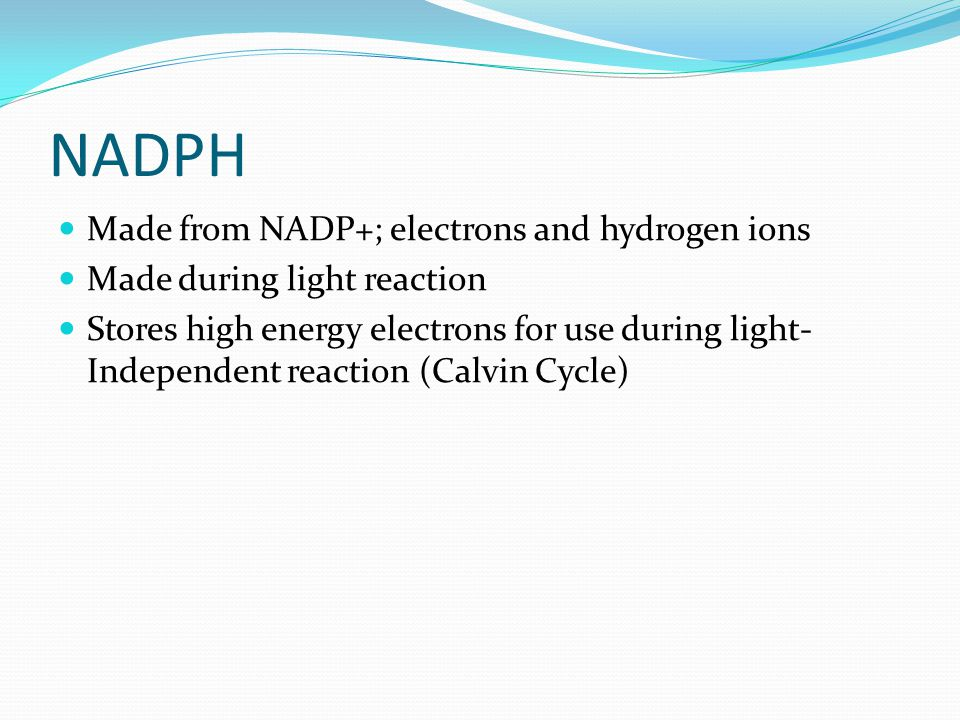 NADPH Made from NADP+; electrons and hydrogen ions